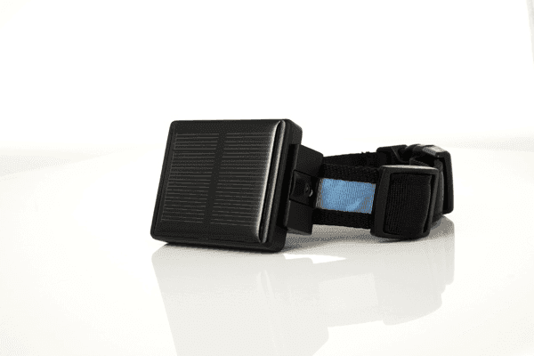 Solar Powered Cow Gps Tracker Effectively Prevent The